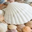 sea-shells-2215409_1280.jpg